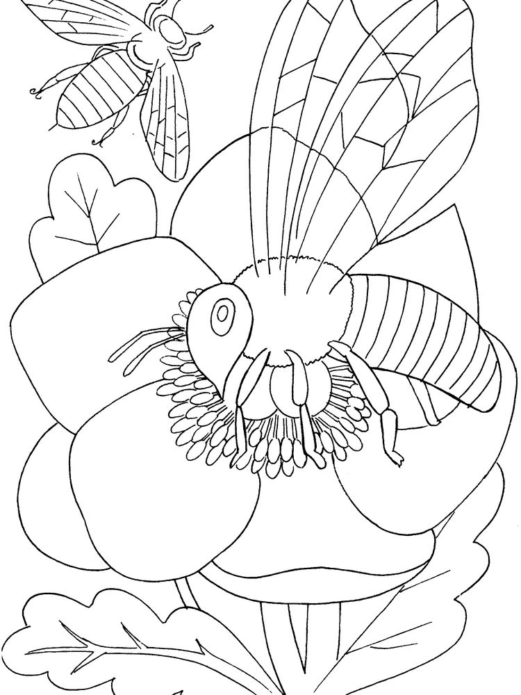 insects and spiders coloring pages