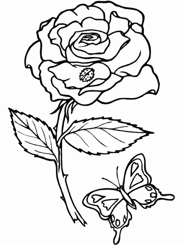 insects coloring pages pdf print