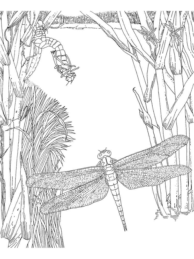 kindergarten insects coloring pages print