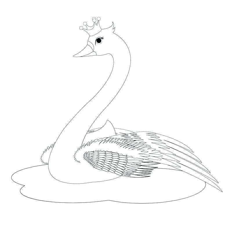 large swan coloring page