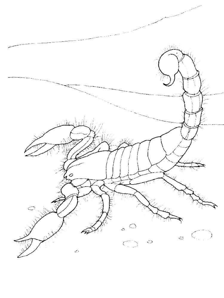 pdf scorpion coloring pages image