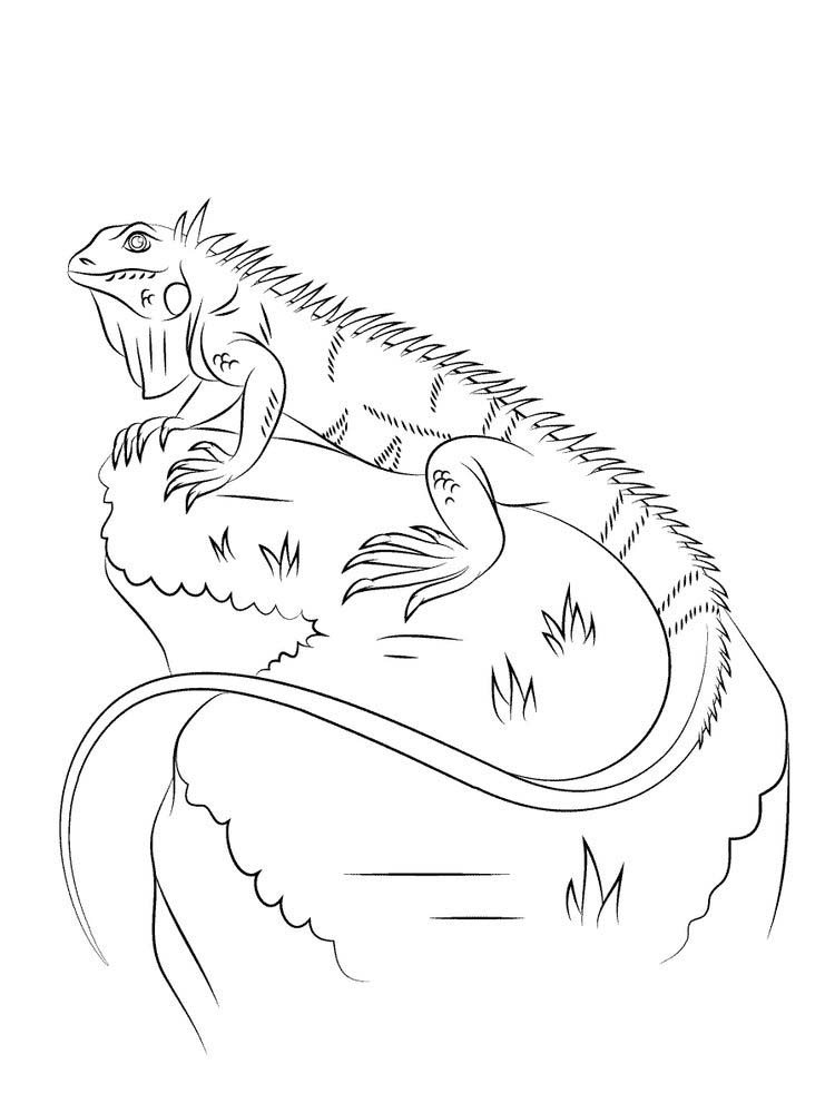 printable Iguana coloring pages free