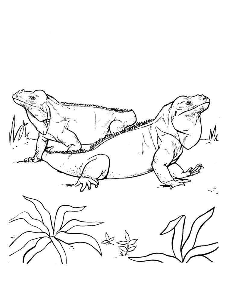 printable Iguana coloring pages picture