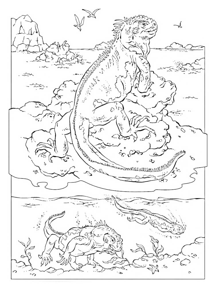 printable Iguana coloring pages printable