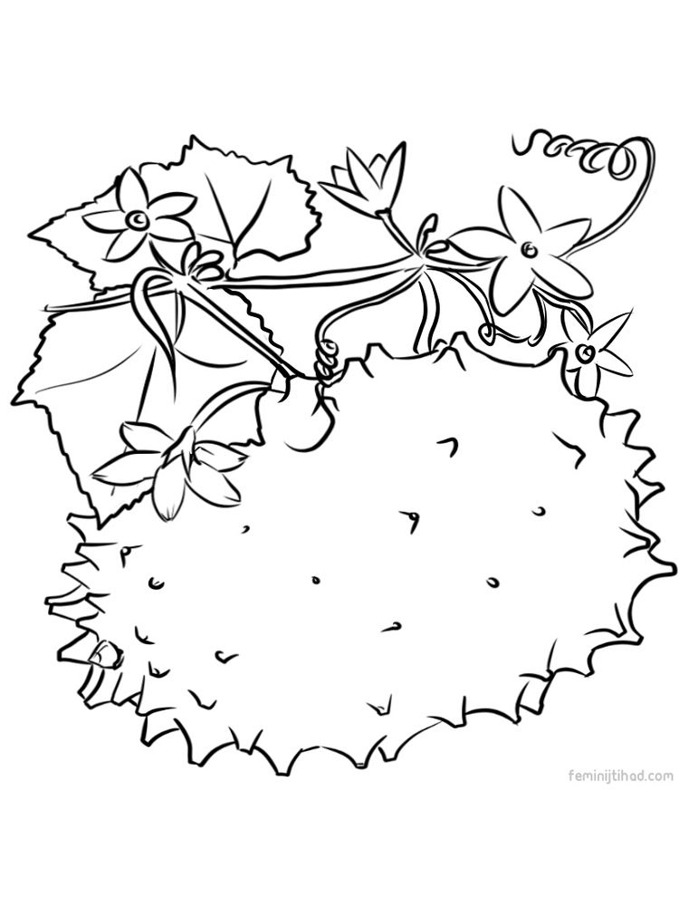 printable kiwano images for coloring page