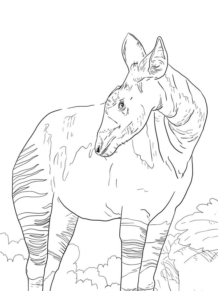 printable okapi coloring pages free