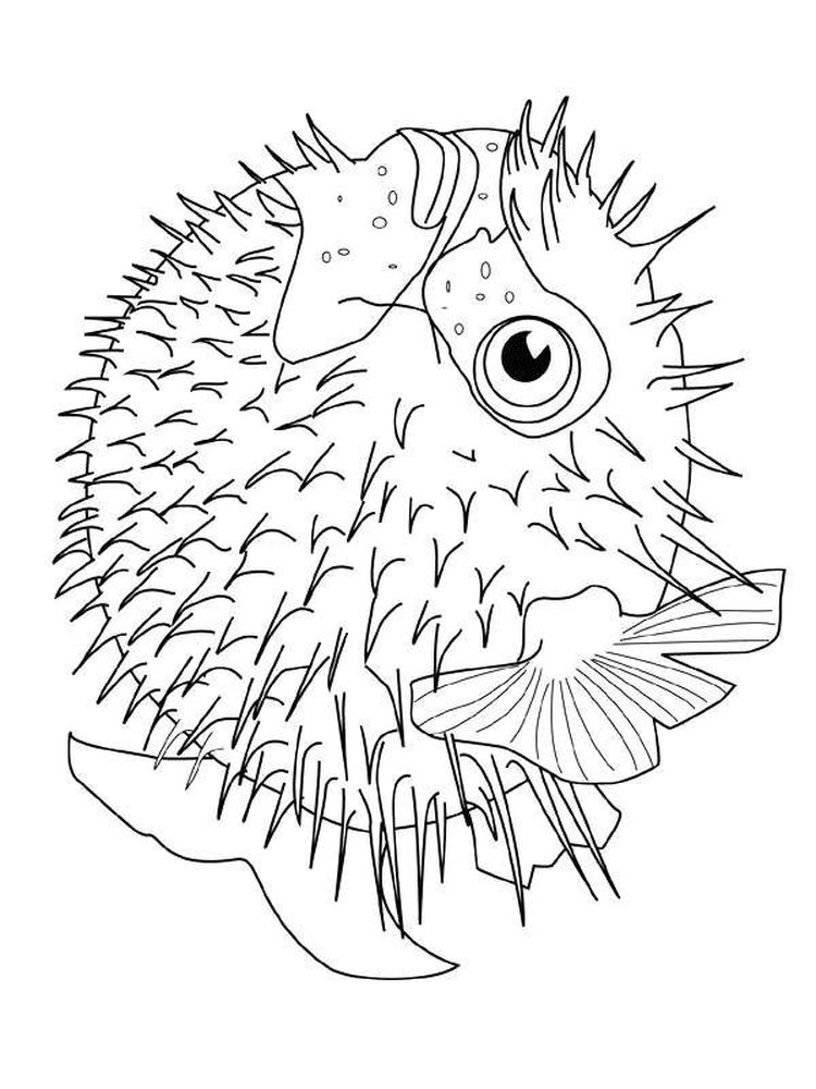 printable puffer fish coloring pages free