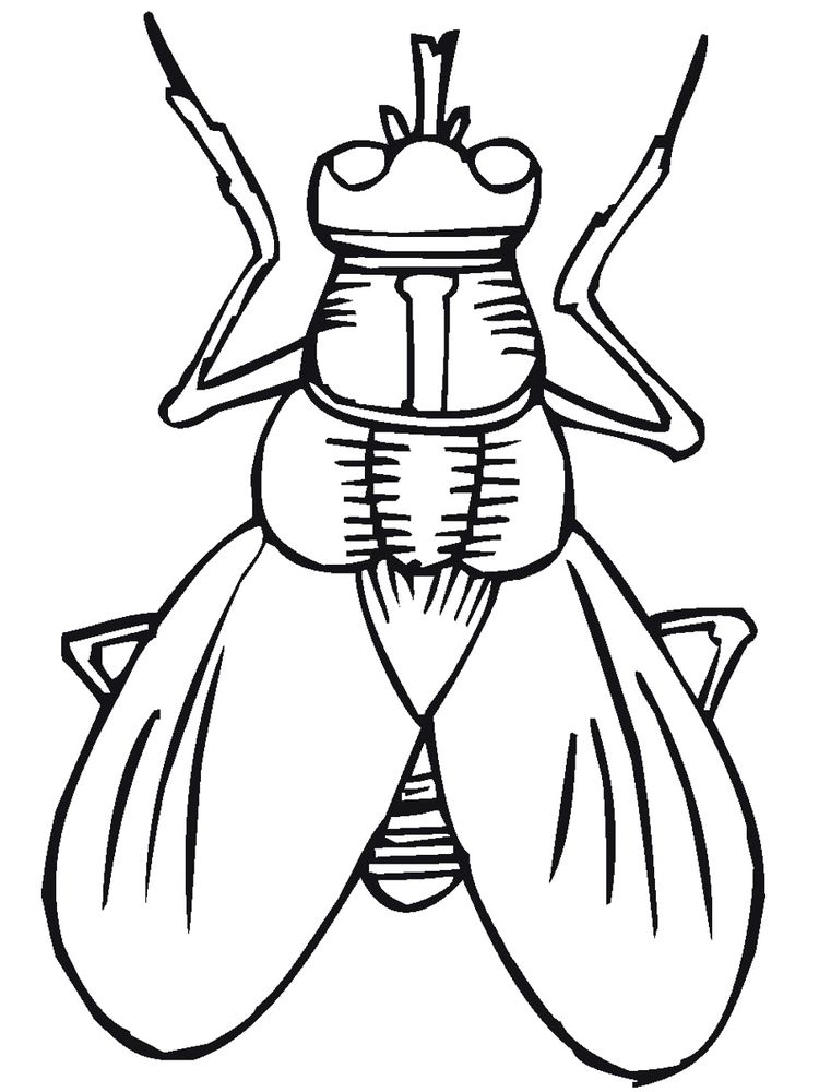 rainforest insects coloring pages print