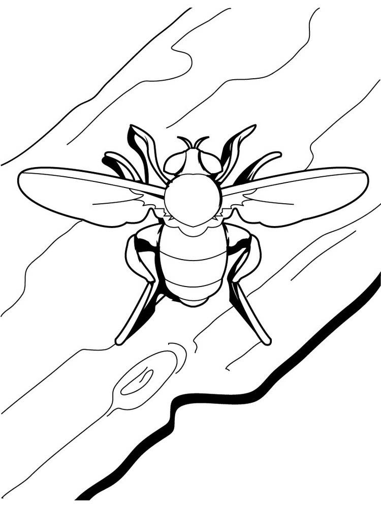 summer insects coloring pages print