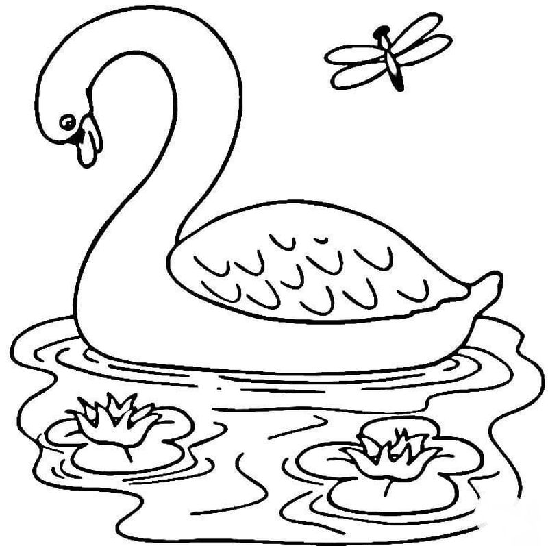 swan coloring pages free print