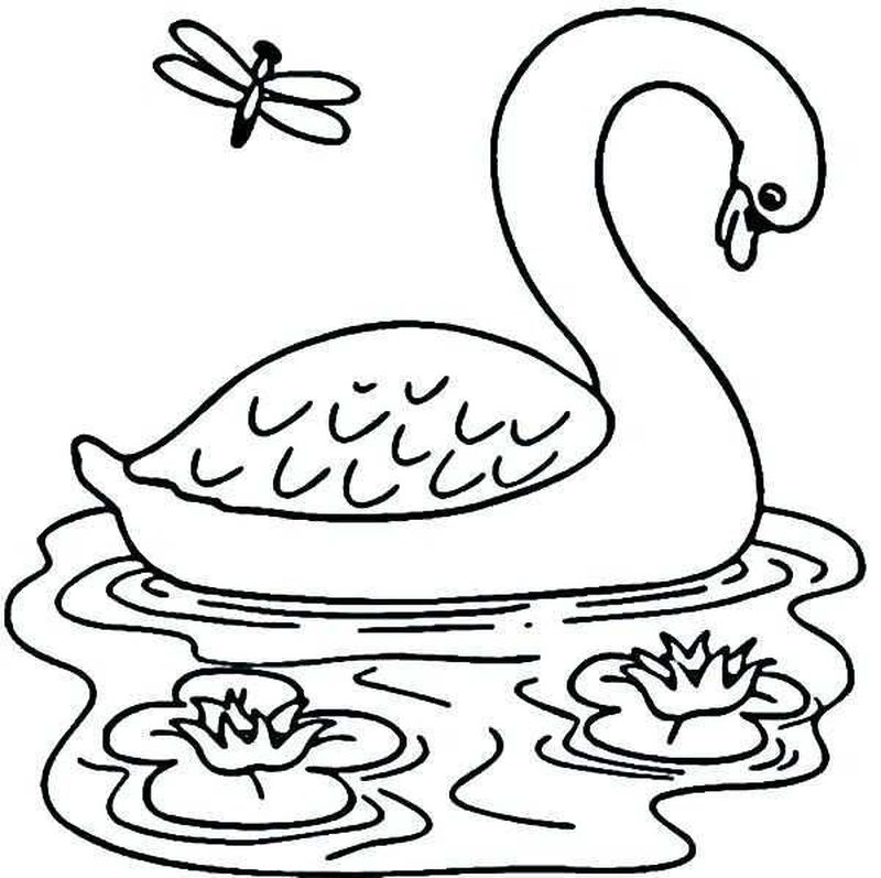 swan coloring pages to print print