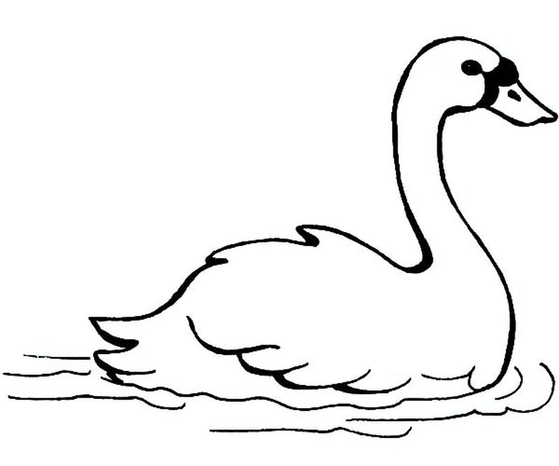 trumpeter swan coloring page