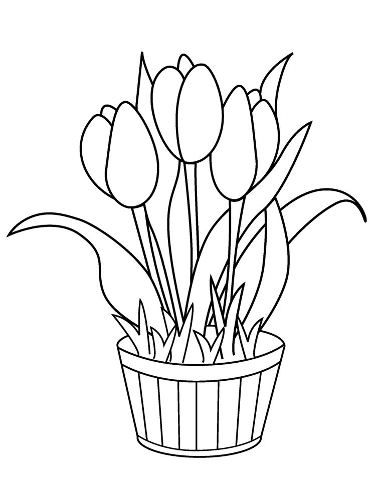 tulip coloring Printable pages pdf