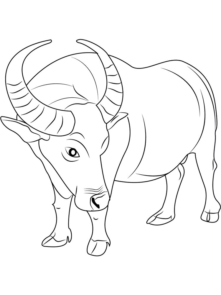 water buffalo coloring pages