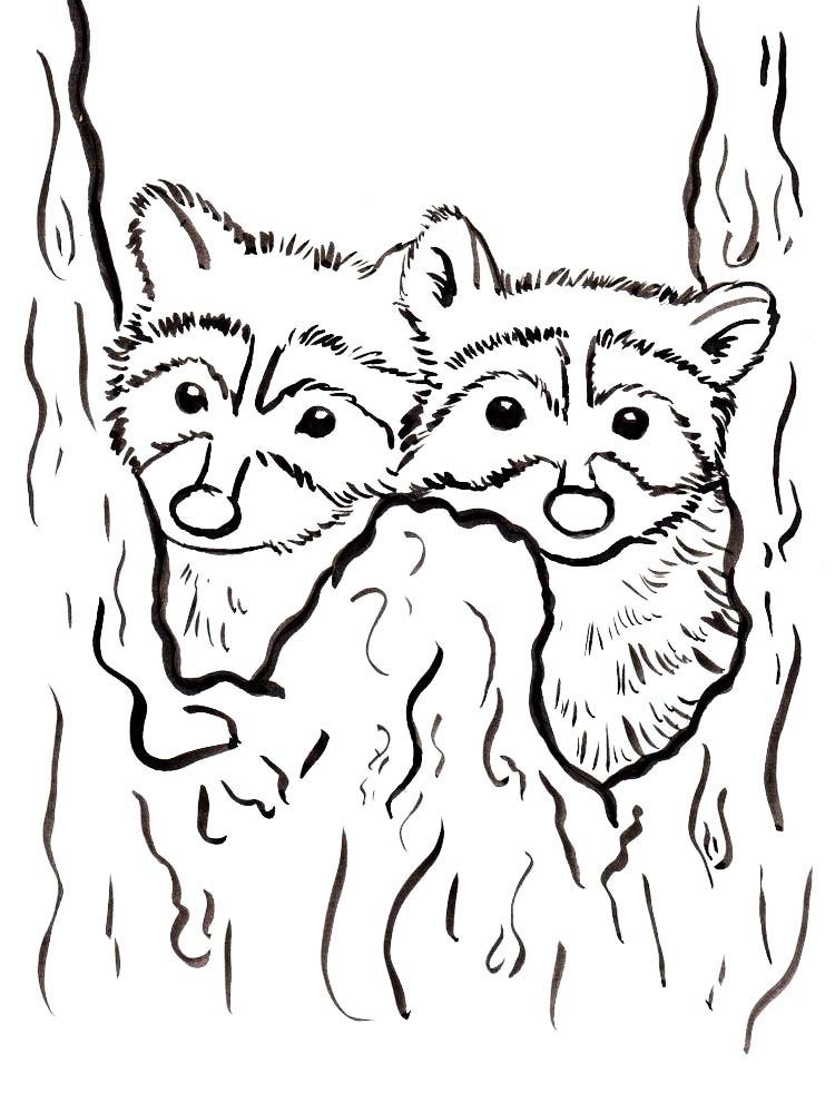 Download Free Printable Raccoon Coloring Page