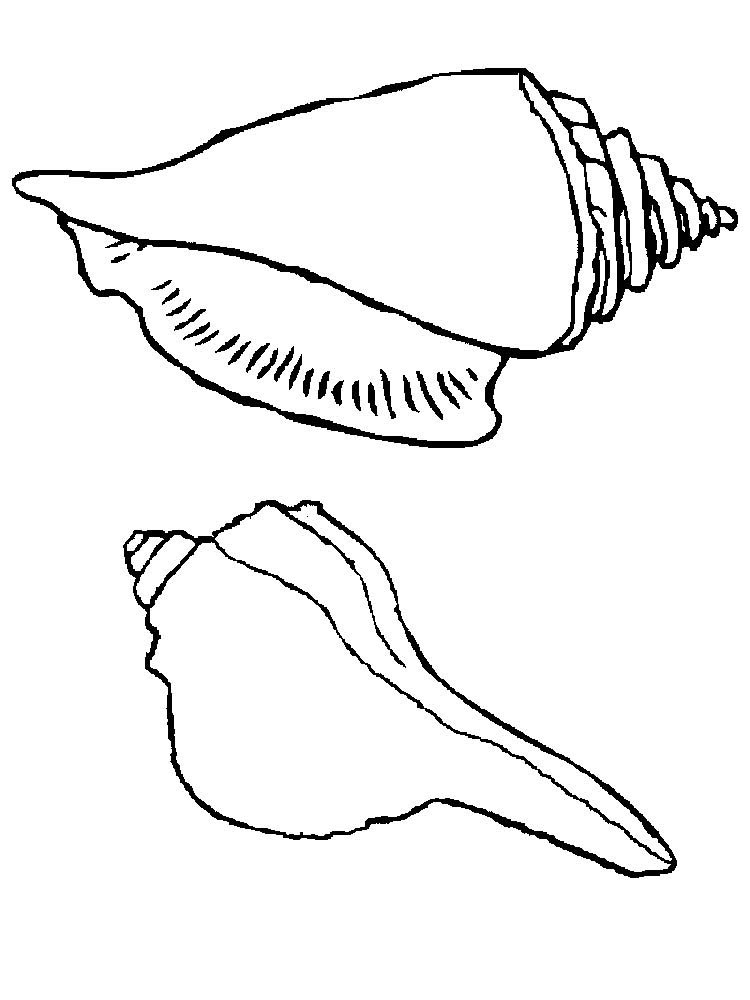 Download Free Printable Shell Coloring Pages