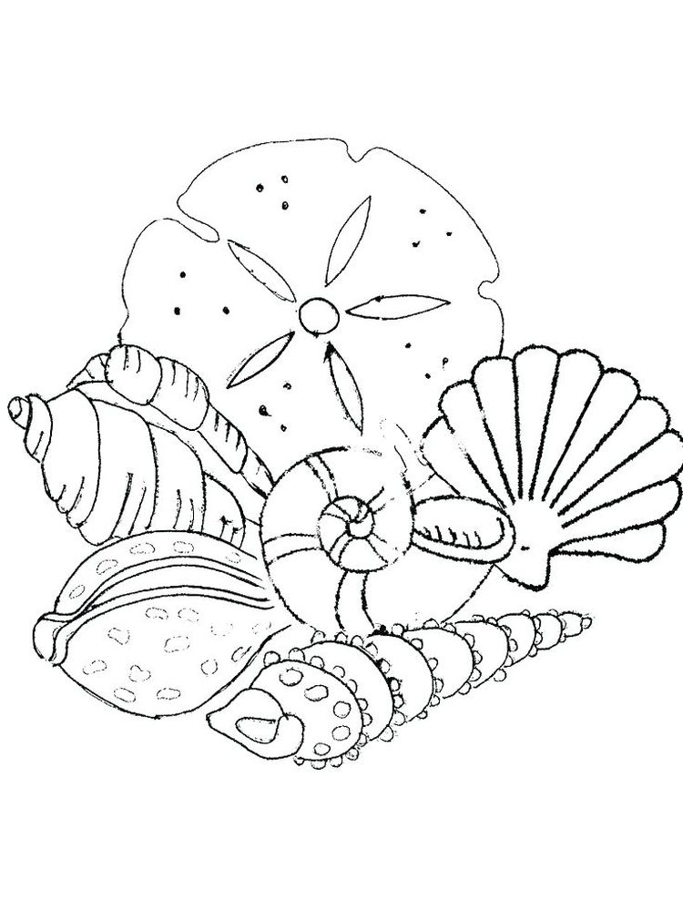 Free Shell Coloring Pages Printable