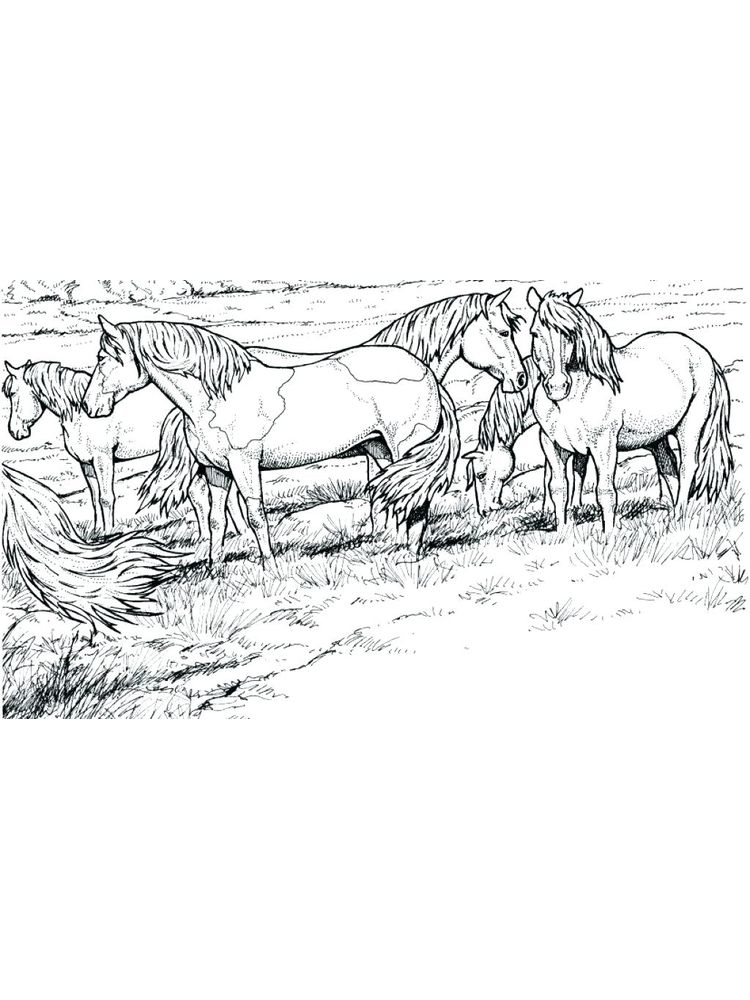 Free wild horse coloring pages image printable