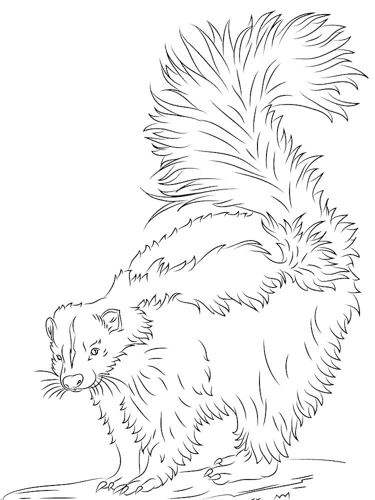Printable Baby Skunk Coloring Pages