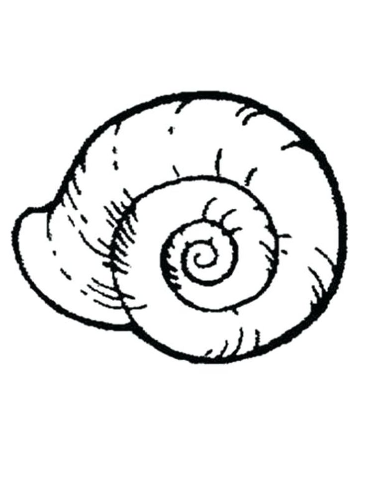 Printable Beach Shell Coloring Pages