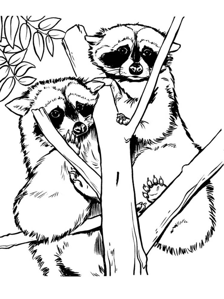 Printable Chester Racoon Coloring Page
