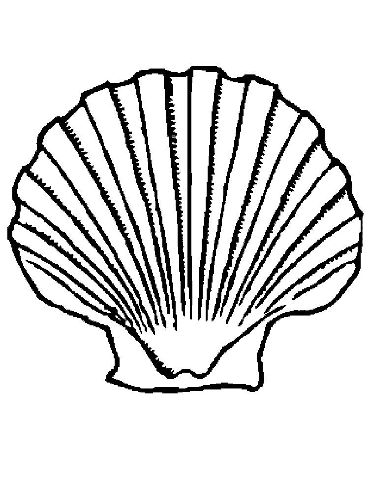 Printable Clam Shell Coloring Page