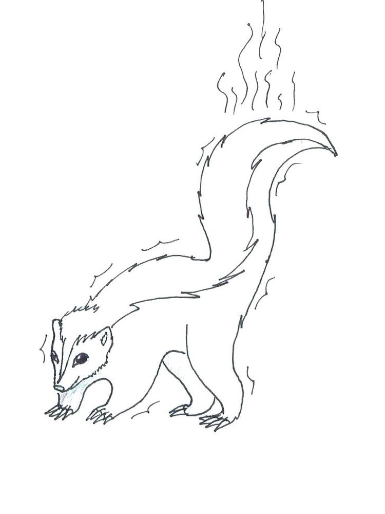 Printable Coloring Page Of A Skunk