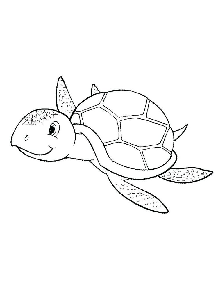 Printable Coloring Page Of Shells