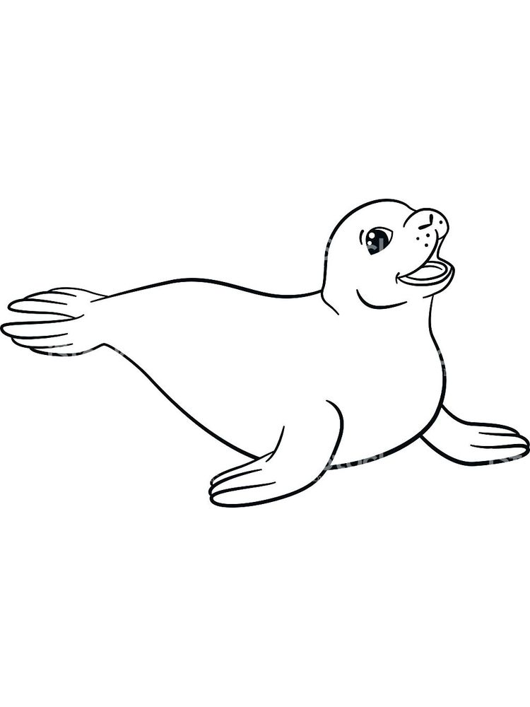 Printable Coloring Pages Of A Seal