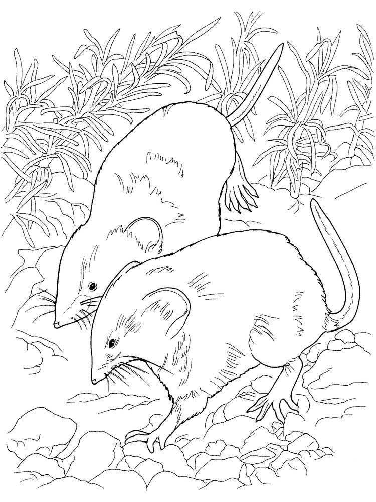 Printable Cute Rat Coloring Pages