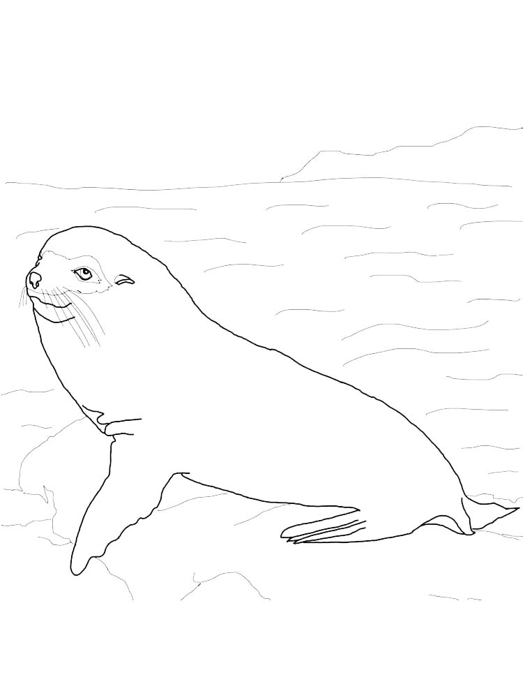 Printable Cute Seal Coloring Pages