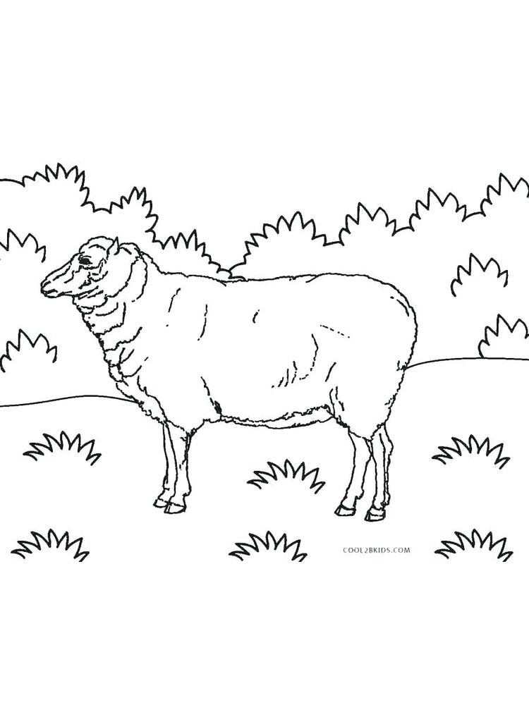 Printable Easter Sheep Coloring Pages