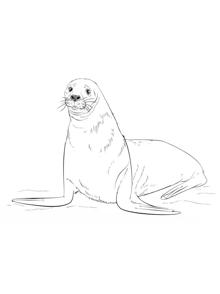 Printable Elephant Seal Coloring Pages