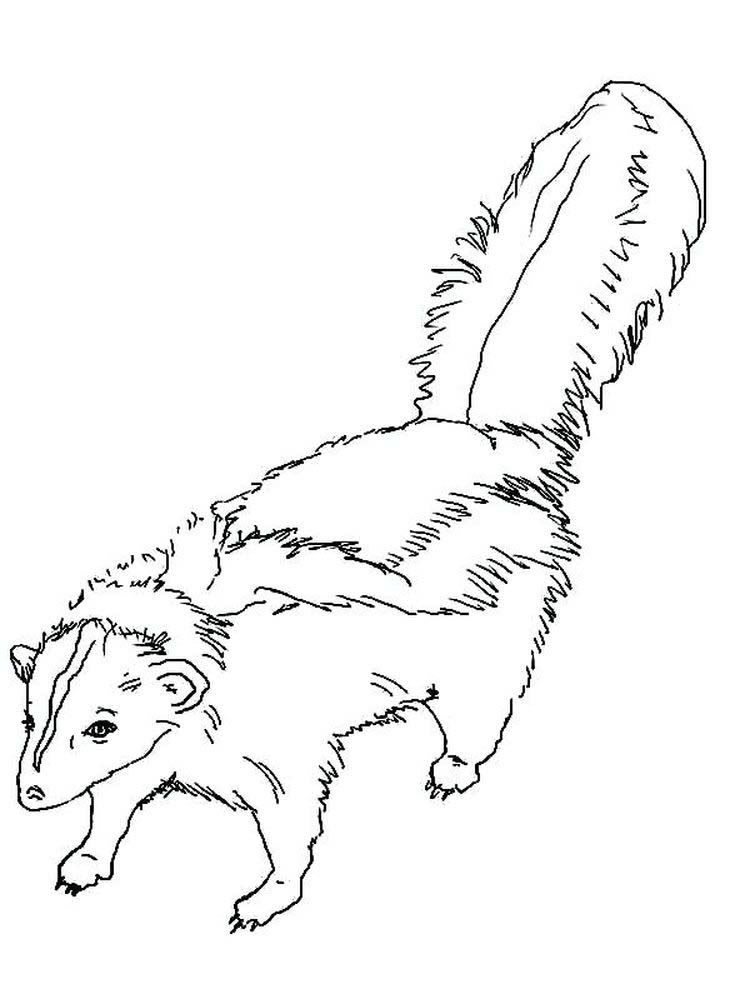 Printable Flower The Skunk Coloring Pages