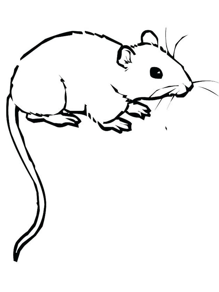 Printable Free Rat Coloring Pages