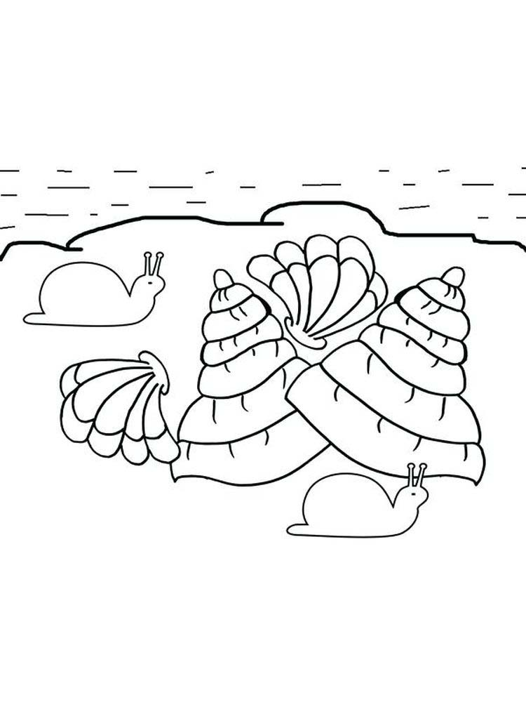 Printable Oyster Shell Coloring Page