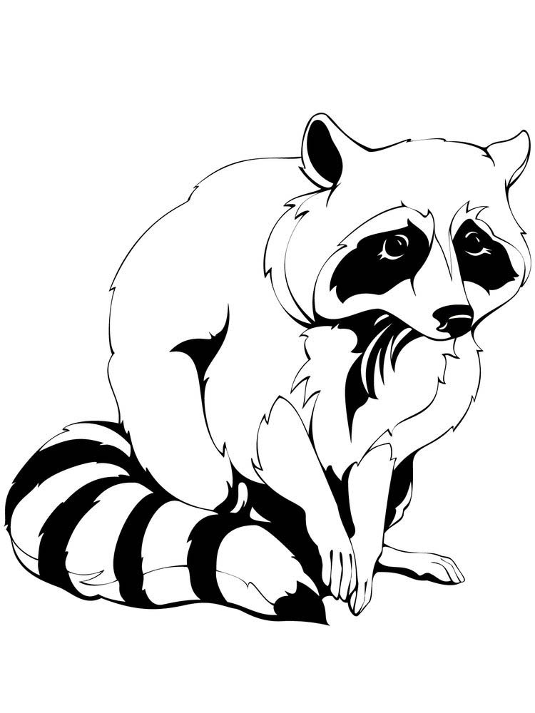 Printable Raccoon Coloring Page Preschool