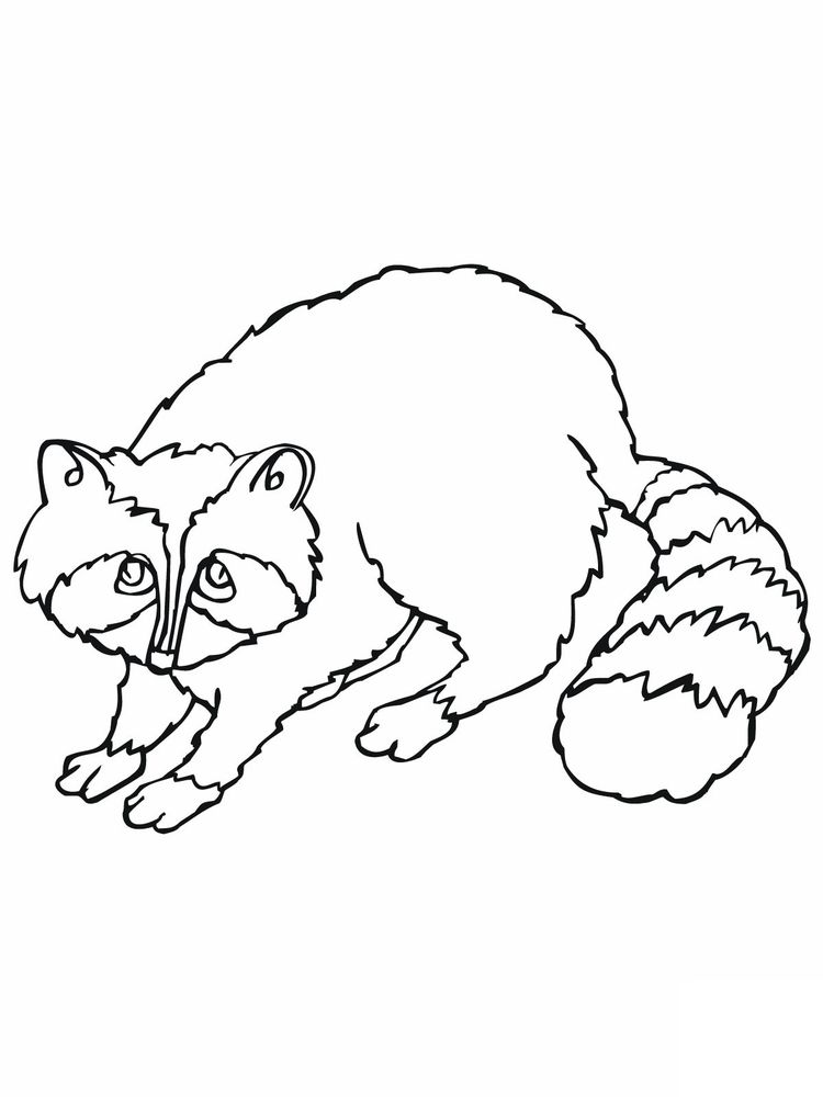 Printable Raccoon Head Coloring Page