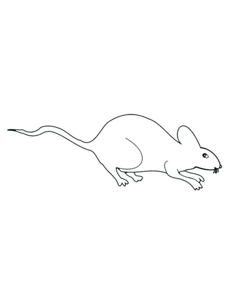 Printable Rat Download Coloring Pages