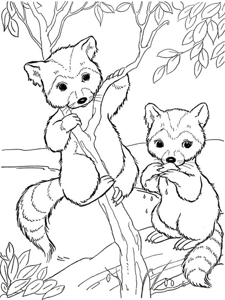 Printable Realistic Raccoon Coloring Page