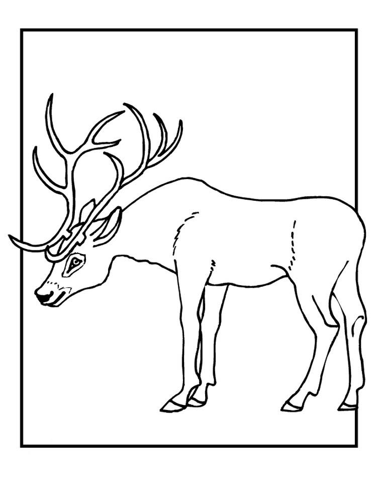 Printable Reindeer Face Coloring Pages