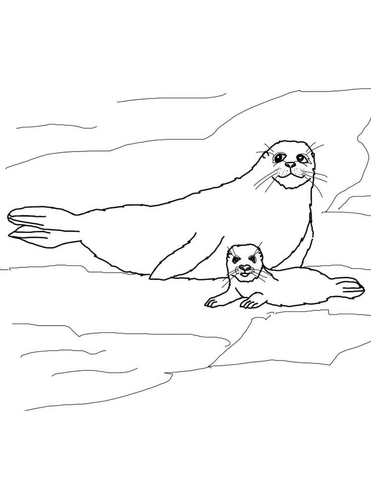 Printable Seal Animal Coloring Pages