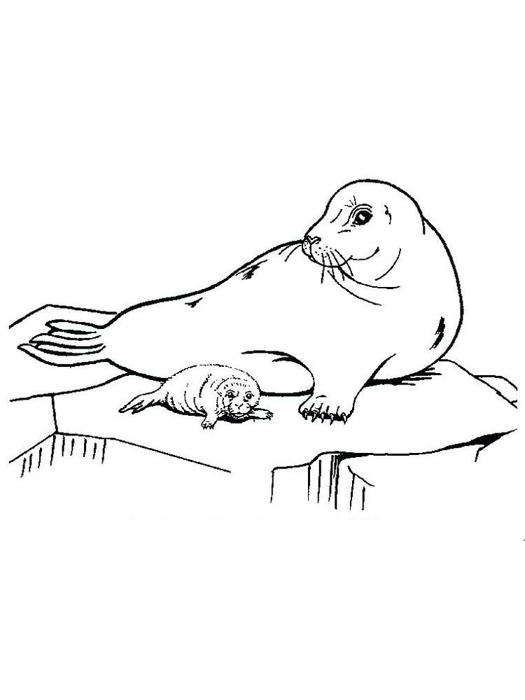 Printable Seal Christmas Coloring Pages