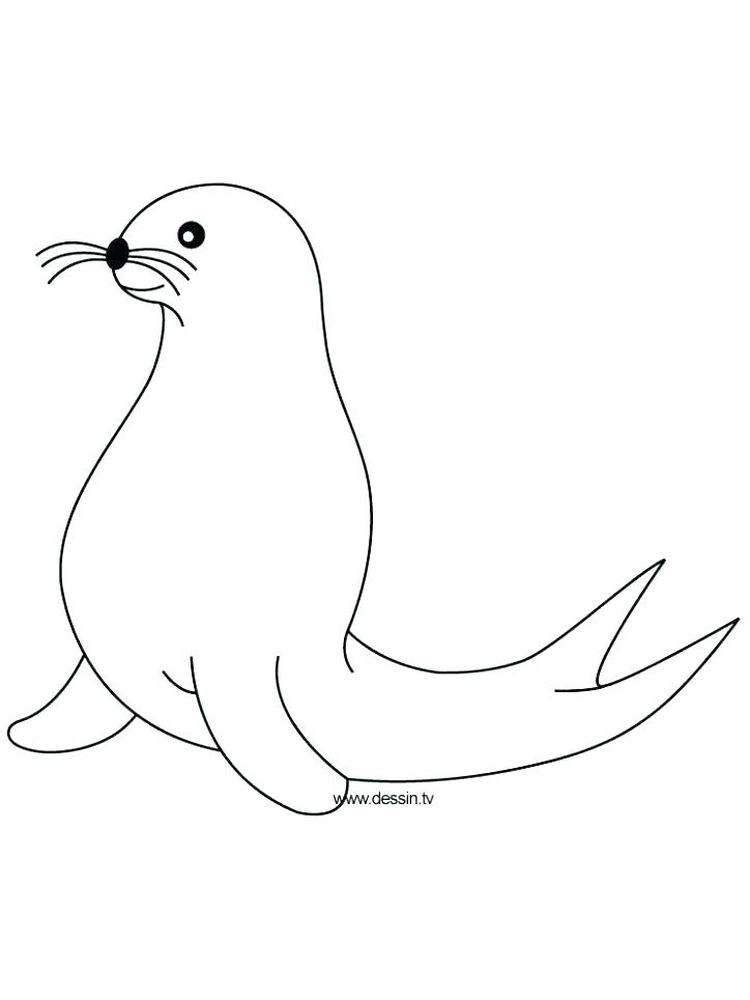 Printable Seal Coloring Pages For Adults