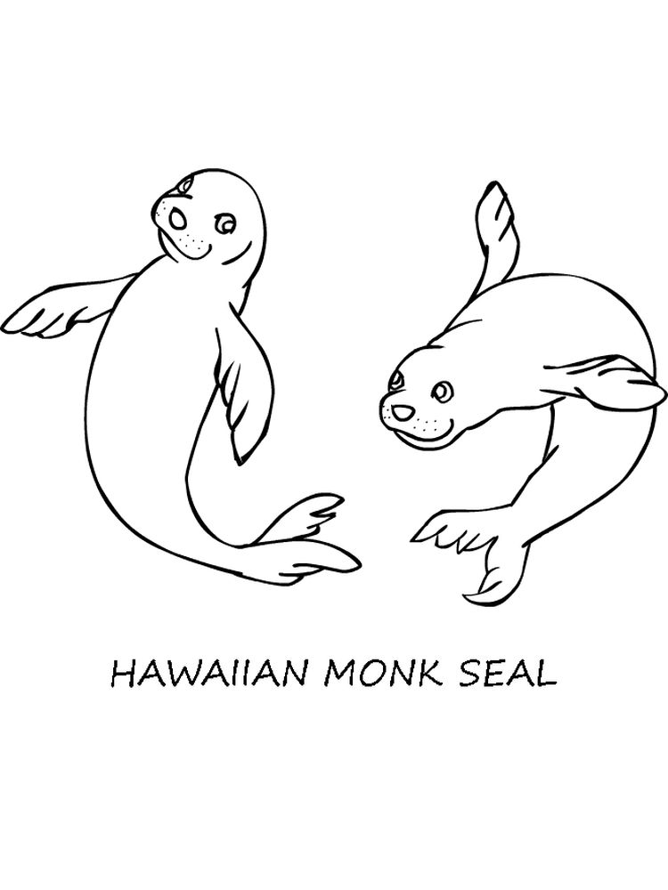 Printable Seal Colouring Pages Free