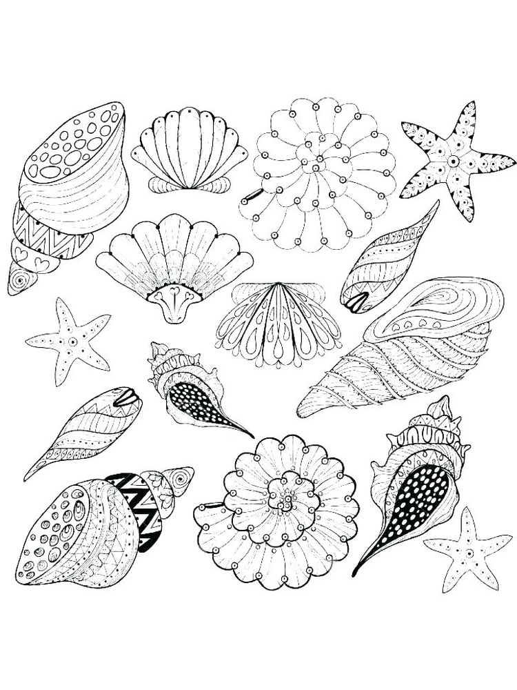 Printable Shell Coloring Page Pictures