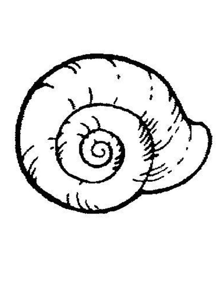 Printable Shell Coloring Pages Free