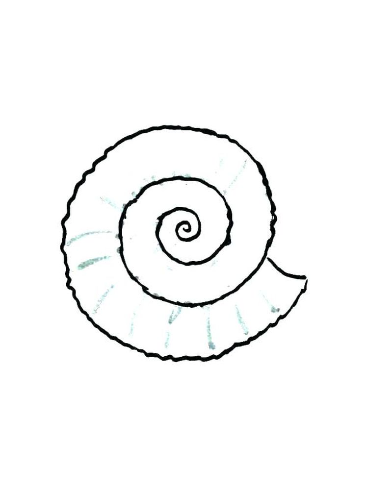Printable Shell Coloring Pages Preschool