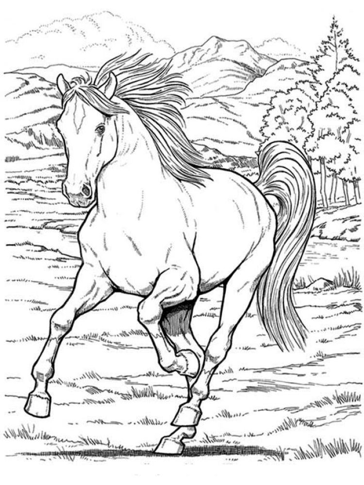 Printable Wild Horse Coloring