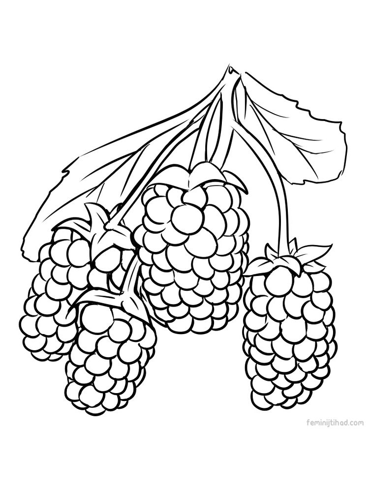 Printable marionberry coloring image pdf